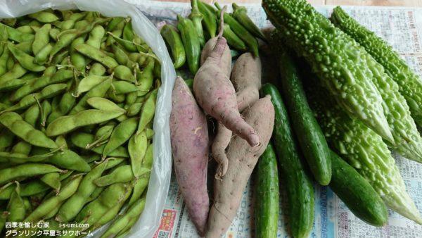 2019.10.8  父母の野菜