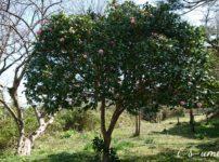 庭の気になる木