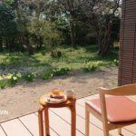 一分咲き桜のカフェテラス