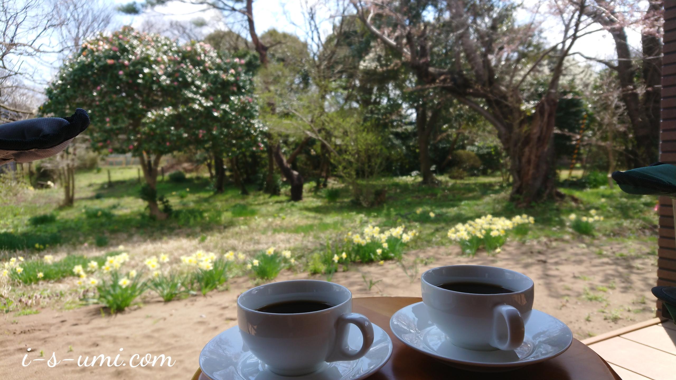 二分咲き桜のカフェテラス