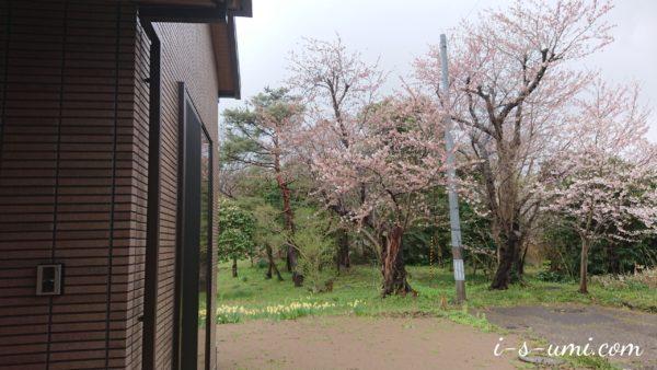 桜 2020.4.6