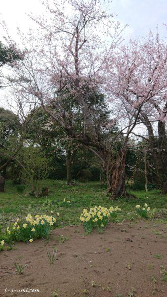 桜 2020.4.7