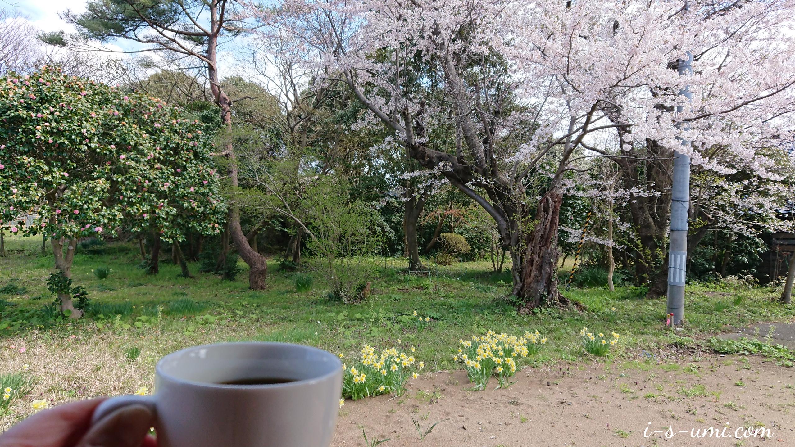 リンクテラス八分咲き桜