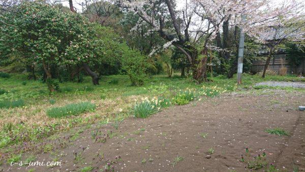 桜吹雪 2020.4.18