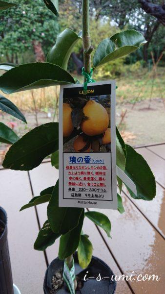 レモン璃の香 2020.12.4