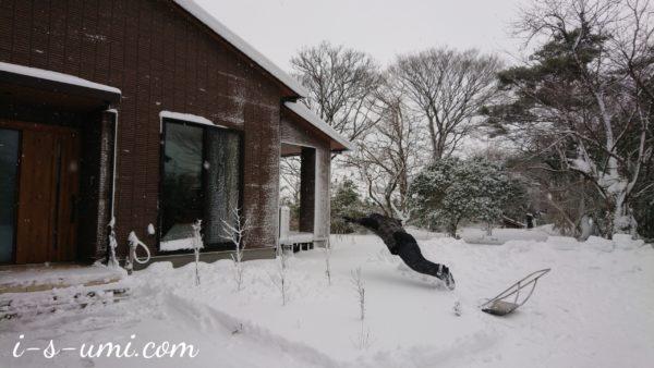 雪にダイブ 2021.1.9