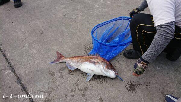 堤防釣り 大真鯛 2021.5.8