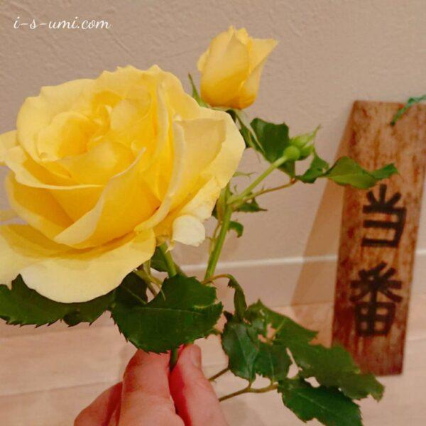 ゴミ当番とバラの花 2021.5.25