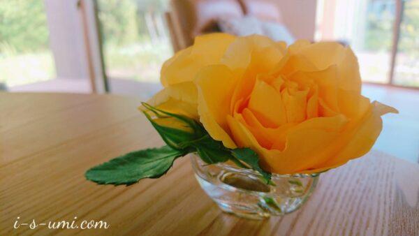 萎れかけたバラ 2021.5.29
