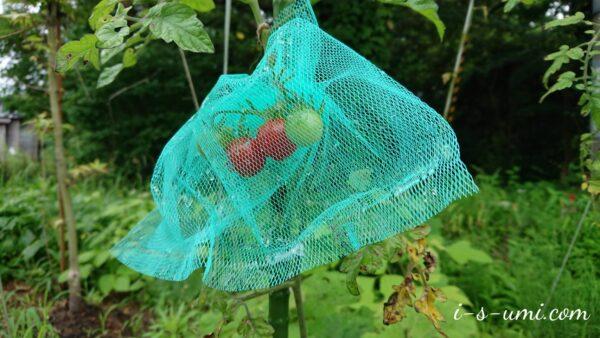 ミニトマト防鳥ネット