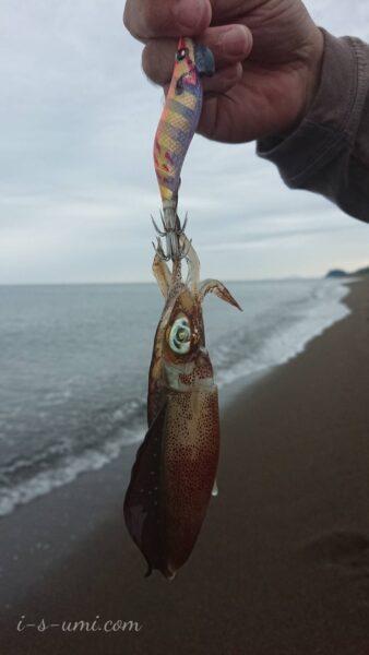 イカ釣りエギング