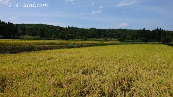 黄金色の田園